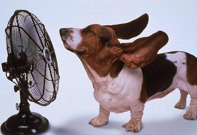 perro con calor