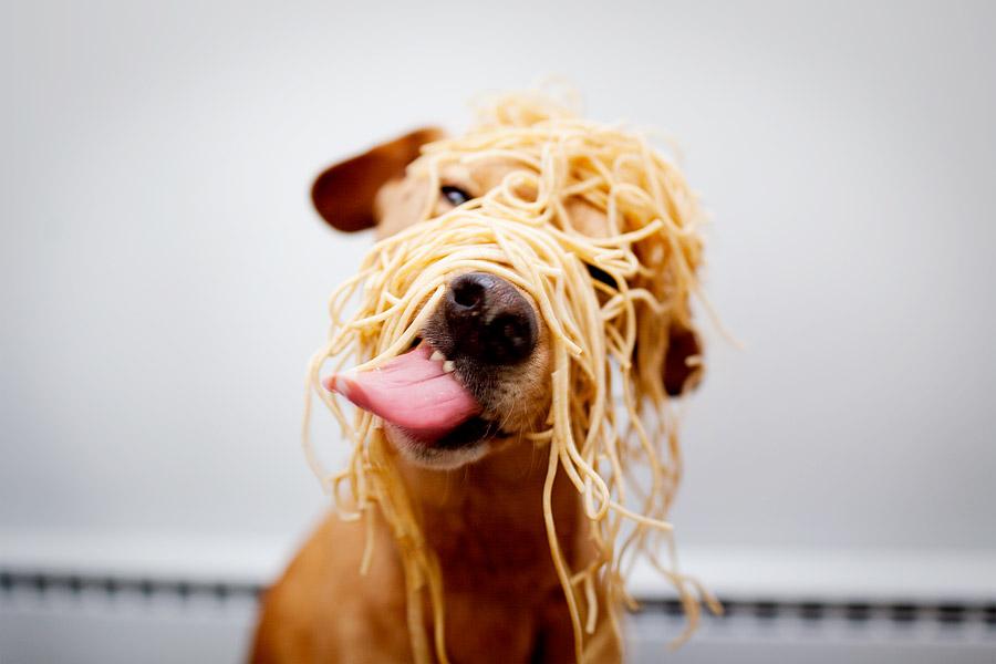 perro comiendo pasta